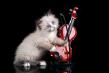 Funny fluffy kitten with a violin