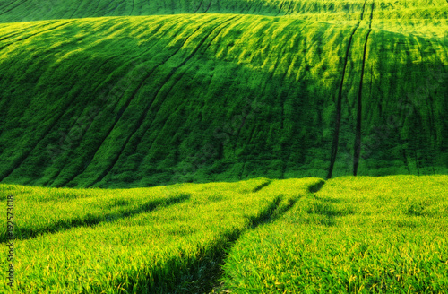 Poster Lime groen spring field. picturesque hilly field. agricultural field in spring