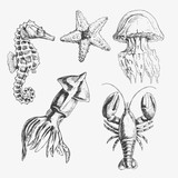 Vector Sea life illustration set . Hand drawn seahorse, starfish, squid, jellyfish, lobster. Isolated on white