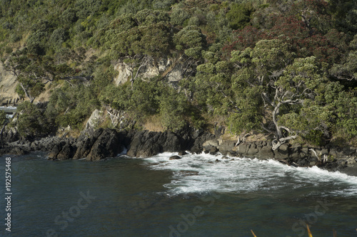 Leigh coast New Zealand. Bay - 192575468