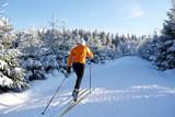 Fototapety Langlauf im Thüringer Wald, Loipe mit Skifahrer, Rennsteig 8