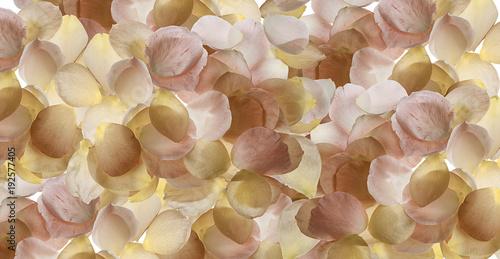 Foto Murales fondo de pétalos de flor desde arriba