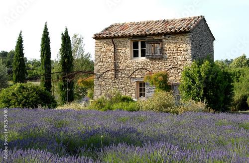 Fotobehang Lavendel Luberon (Vaucluse), maison de pierre et lavande, provence, France