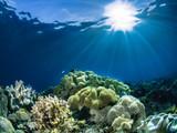 Underwater photography - 192587846
