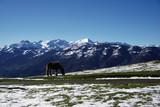 Paisaje de montaña repleto de nieve con una yegua paciendo en el prado.