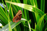 Beautiful Owl Butterfly resting on a vibrant gree leaf - 192594897