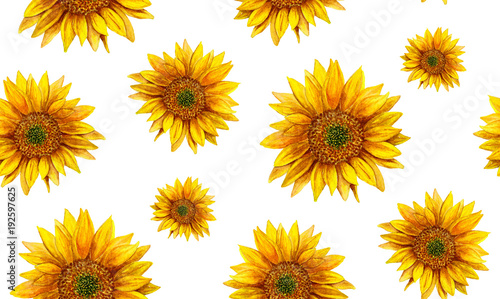 Watercolor sunflower. Rustic pattern. Country yellow flowers background