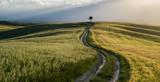 Tuscan countryside - 192598242