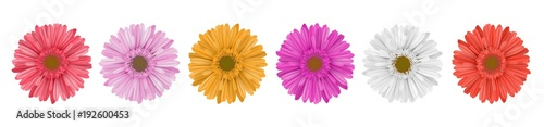 Poster Separate gerbera daisy flower row, for horizontal banner, in different colors. Vector illustration isolated on white
