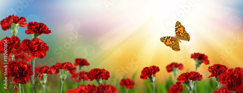 Foto op Canvas Klaprozen image of a garden with flowers and a beautiful butterfly