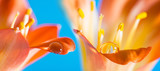 a flower detail with a big rain drop - macro detail - 192605073