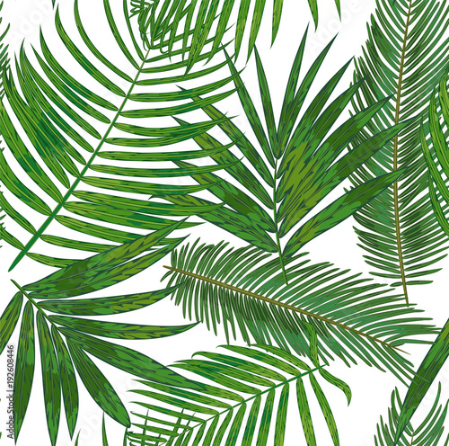 Vector Seamless pattern of tropical palm leaves. background of green areca, sago, howea foliage