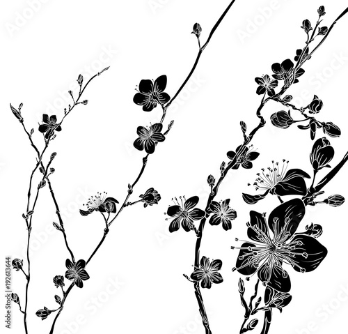 Peach Cherry Blossom Flowers Background Pattern - 192613644