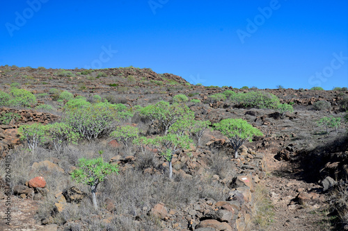 Keuken foto achterwand Olijf La Gomera: hike from Playa de Santiago to San sebastian