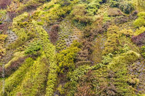 Patrick Blanc Vertical Garden Wall