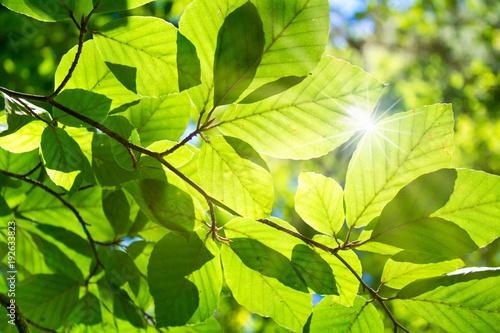 Aluminium Lime groen Buchenwald im Sonnenlicht