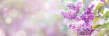 Lilac flowers spring blossom, sunny day light bokeh background © Mariusz Blach