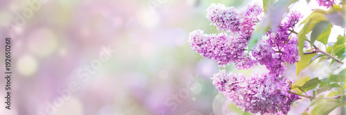 Poster Lilac flowers spring blossom, sunny day light bokeh background