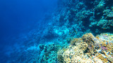 corals on the seabed - 192657005