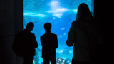 Silhouettes of people who observe tropical sea fish in the Oceanarium - 192657259