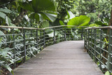 tropical forest pathway - 192685846