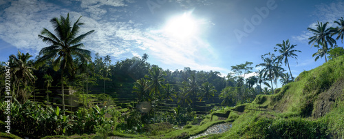 Deurstickers Rijstvelden Rice field on terrace in Bali Indonesia. Panoramic view