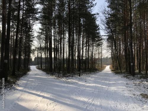Staande foto Weg in bos zimowy las