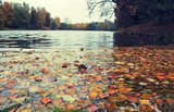 Cloudy autumn landscape.Fall red foliage on the surface of water.Small pond in the park.Moscow region,Russia.Natural background. - 192709800
