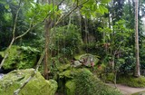 Jungle very green with many plants in Bali Indonesia - 192710443