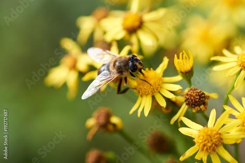 Fotobehang Bee Natur