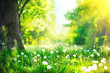 Beautiful spring landscape. Park with old trees, green grass and dandelions