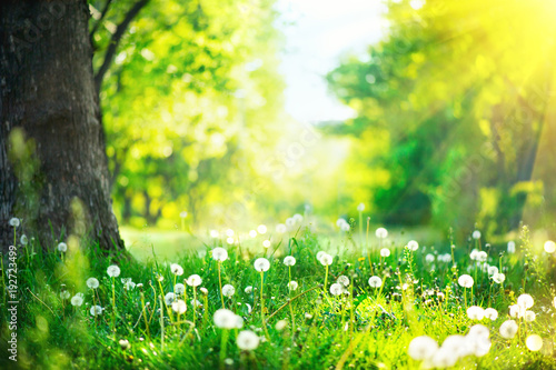 Fotobehang Lente Beautiful spring landscape. Park with old trees, green grass and dandelions