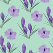 Beautiful orchid violet and crocuses flowers illustration - 192723640