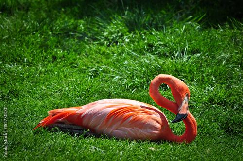 Fotobehang Toronto Flamingo in Toronto Zoo