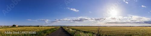 Foto op Plexiglas Panoramafoto s A sunny field