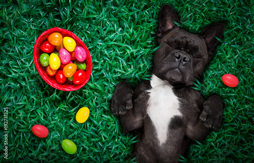 Staande foto Crazy dog happy easter dog with eggs