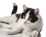 black and white cat close up in the detail - 192731463