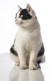 black and white cat on a white background - 192731477