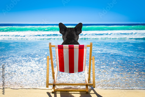 Staande foto Crazy dog dog relaxing on a beach chair