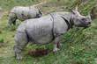Quadro Wild rhinoceros in Chitwan National Park in Nepal
