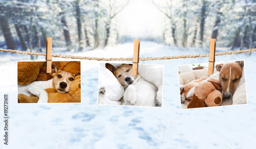 Staande foto Crazy dog cute photos of dogs on string in winter