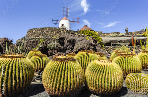 Papiers peints Iles Canaries Beautifully designed cactus garden on Lanzarote with windmill in the background, close-up, Guatizia, Lanzarote, Canary Islands , Spain, Europe