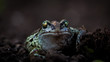 Frog (close up)