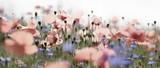 pastellne mohn- und kornblumen, panorama