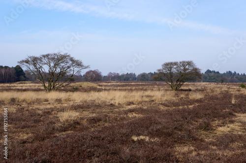 Tuinposter Diepbruine Nature reserve area called Het Gooi near Hilversum in the Netherlands.