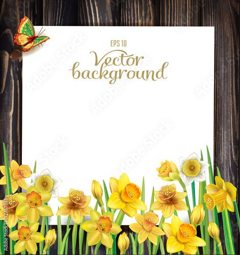 Daffodils kwitną na drewnianym tle