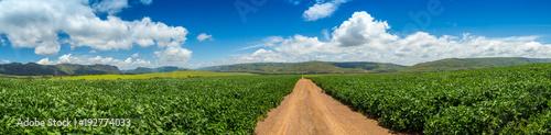 Aluminium Zomer soybean plantation road montain brazil
