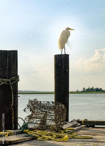 heron white perched on pylon at beach shore sea