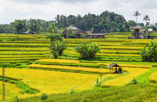 Aluminium Meloen Rice Fields in Indonesia