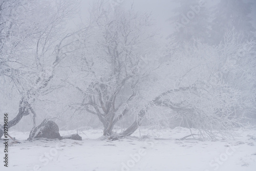Fotobehang Donkergrijs Winterlandschaft mit Bäumen und Ästen überzogen mit Raureif